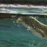 Найденное в Коми древнейшее четвероногое пармастега имеет много архаичных рыбьих черт