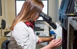 Полисахариды из красных водорослей влияют на иммунную систему мышей
