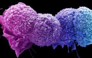 Программный конвейер по предсказанию последствий мутаций для белков