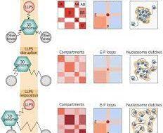 Принцип «масла в воде» помог сохранить трехмерную структуру ДНК