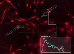Ученые расшифровывают «язык» иммунных клеток