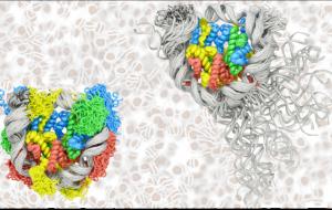 Суперкомпьютер помог учёным МГУ разобраться с дыханием и скольжением ДНК