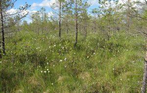 Торфяные болота могут помочь на время «затормозить» глобальное потепление
