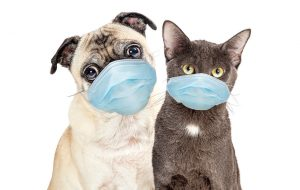 Российские ученые нашли способ тестировать животных на антитела к SARS-Cov-2