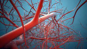Найдены биомолекулы, ускоряющие рост сосудов спинного мозга