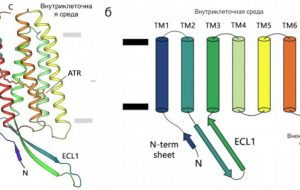 Учёные исследовали эволюцию «светособирательных» белков