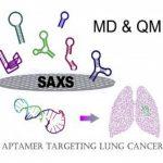 Ученые «отрезали хвост» аптамерам и сделали их более специфичными к раковым клеткам